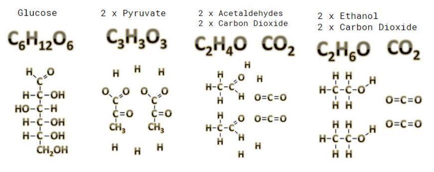 Full Glucose To Ethanol